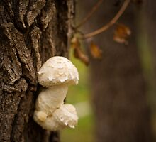 mushroom on a tree by Pavel Maximov
