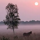 Misty New Forest morning by Gary Richardson