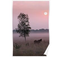 Misty New Forest morning Poster