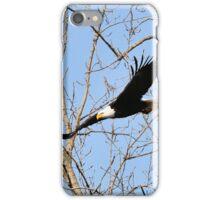North American Bald Eagle 2 iPhone Case/Skin
