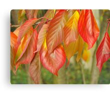 Hanging Red Leaves. Canvas Print
