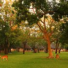 Loving Letaba by Dan MacKenzie