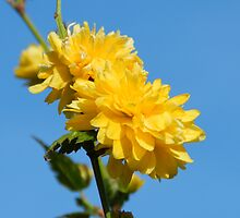 Yellow flower in the sky. by kelly-m-wall
