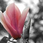 Colour filter flower by kelly-m-wall