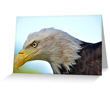 Bald Eagle Up Close and Personal Greeting Card