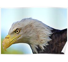 Bald Eagle Up Close and Personal Poster