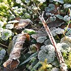 New Year Frost, 5 by Alice Schuerman
