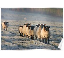 Sheep - The Daily Commute Poster
