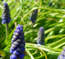 Bluebell Buds by BlueEyePictures