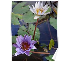 Water Flowers - Flores Del Agua Poster