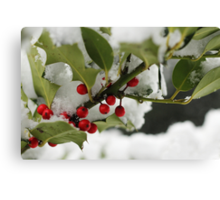 Holly & Snow Canvas Print