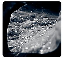Leaf with water drops Photographic Print
