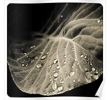 Leaf with water drops Poster