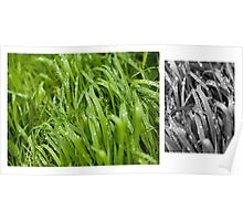 Water drops on the green grass Poster