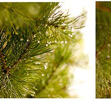 Pine needle with dewdrops in morning by Anton Belovodchenko
