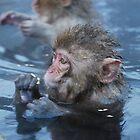 Baby snow monkeys in the hot springs by Istvan Hernadi