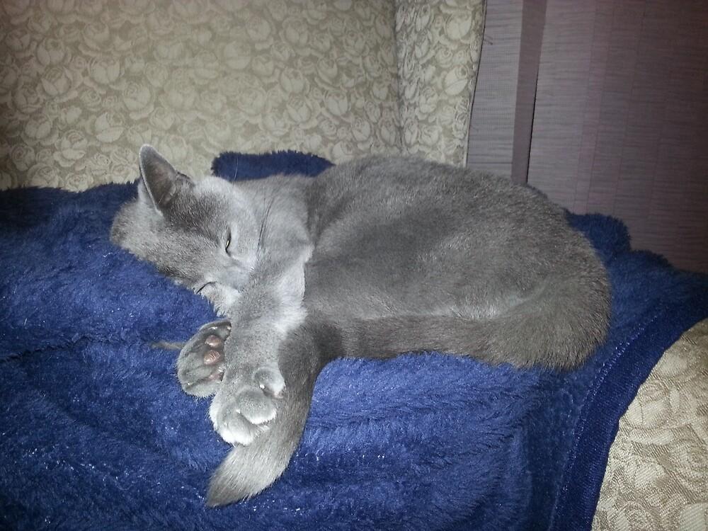 Sleeping Sawa by Honorata  Armstrong
