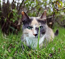 Cute Cat by Lina Ottosson
