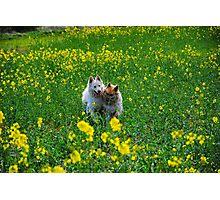 Happy Field Photographic Print