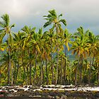Tropical Palms by Paul Laubach