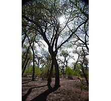 Rio Grande trees Photographic Print