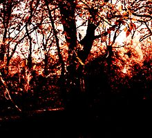 Red Wood (print) by sinaprax