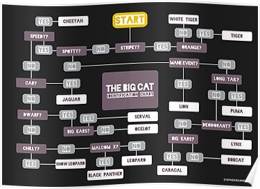 Big Cat Identification Chart by Stephen Wildish