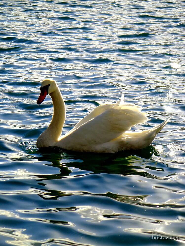 Swan, Lake Bled, Slovenia by christazuber