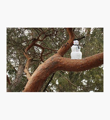 Snowman Climbed Tree Photographic Print