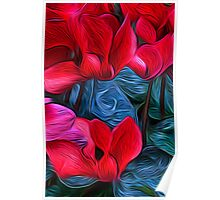 Cyclamen Dreams Poster