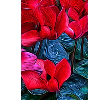 Cyclamen Dreams Photographic Print