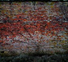 the walled garden III by yorktone