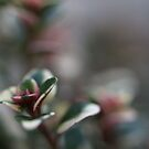 Plant Close up by PMJCards