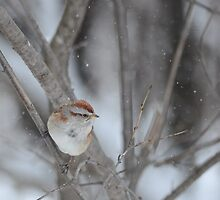 American Tree Sparrow by Jeannine St-Amour