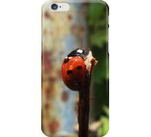 Ladybird iPhone Case/Skin