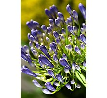 Close With Agapanthus Flower Photographic Print