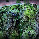 Green Stump by silentstead