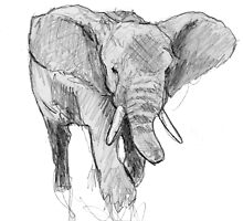 African elephant by patricia shrigley