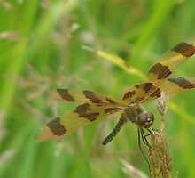 Dragon fly by PARADOXIMAGING