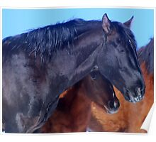 Trusting Heart Of A Foal Poster