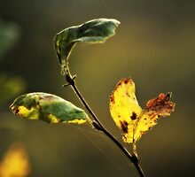 three of november's light~ by Brandi Burdick