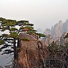 Rock Pine by alex9mm