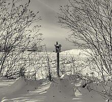 For The Birds by Keri Harrish
