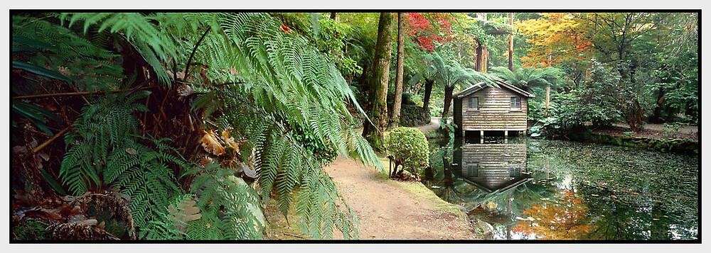 A Secret Garden, Dandenong Ranges VIC by Chris Munn