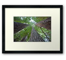 Walking with Giants Framed Print