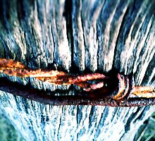 Rusty by Jock Anderson