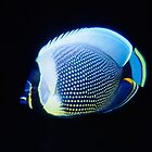 Reticulated Butterflyfish, Vanuatu by Erik Schlogl