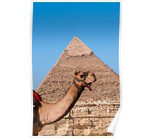 A camel and the Cephren Pyramid Poster