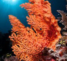 Soft coral, Wakatobi National Park, Indonesia by Erik Schlogl