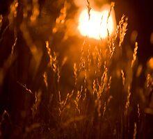 lying in the fields by White Owl